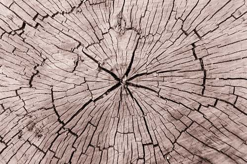 plant tree trump tree