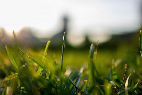 selective focus of grass