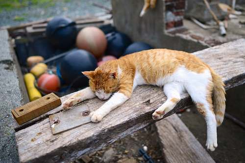 animal orange tabby cat lying on brown wooden plank during daytime photography feline