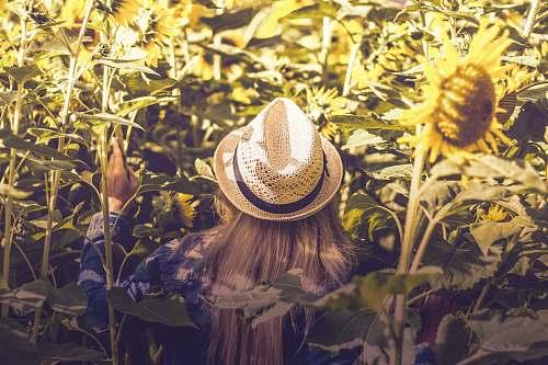 hat person wearing white hat beside sunflower fields flora