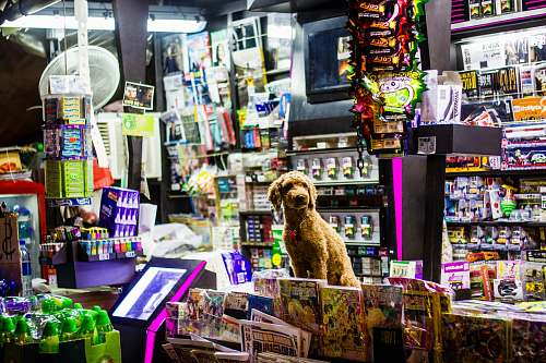 newsstand  animal