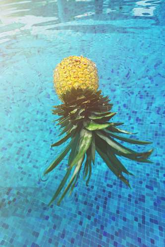 ocean pineapple on pool nature