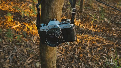 photo black and gray Canon SLR camera hanged on wooden trunk free for commercial use images