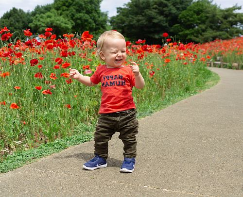 photo toddler laughing while standing near red petaled flowers free for commercial use images