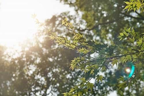 light sun shining over trees tree