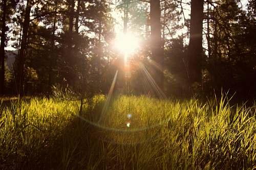 sunshine sunlight through trees green