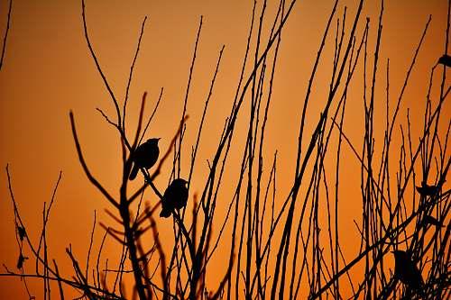 bird silhouette of bird on stick india