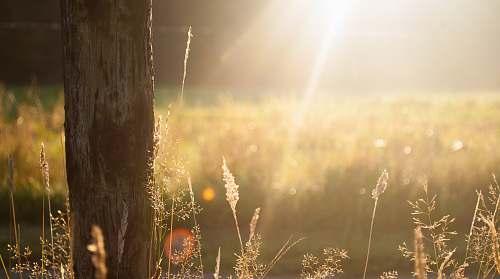 light brown tree bark during sunrise grass
