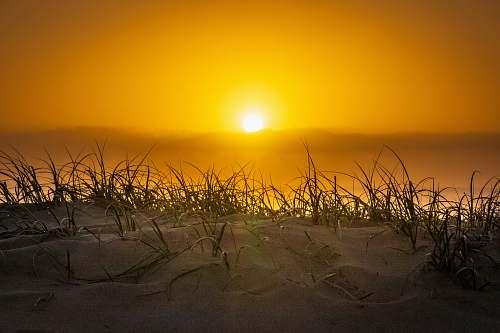 sand grass and white sand under golden hour soil