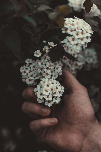 human person holding white flowers people