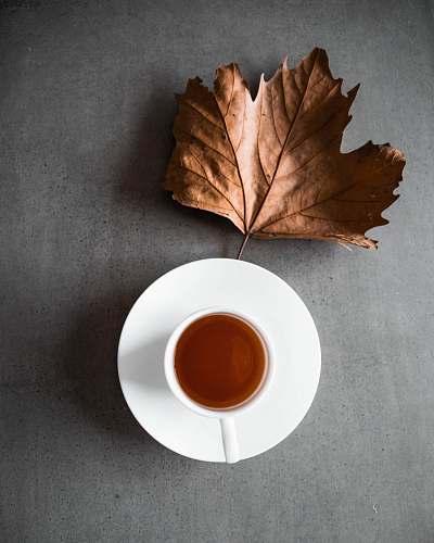plant brown dried maple leaf beside cup of tea leaf