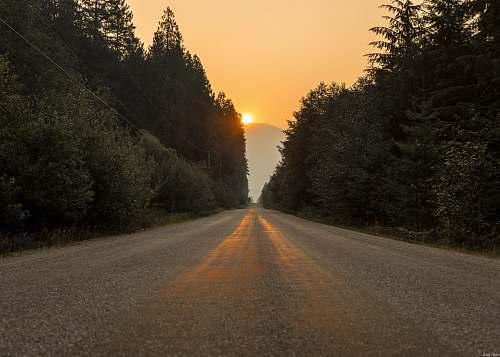 gravel gray dirt road in between trees at sunset dirt road