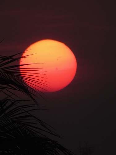 orange photo of sun leaves