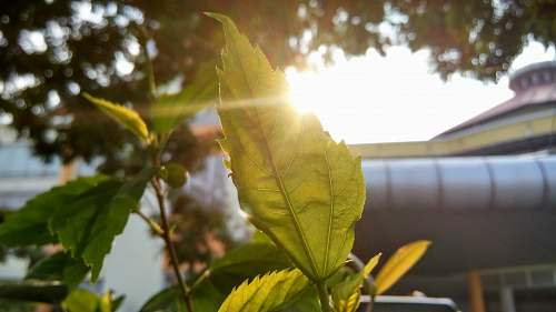 sunlight shinning light with green leaf sprout plant