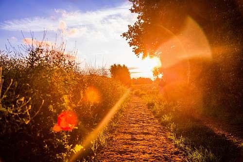 path  trail