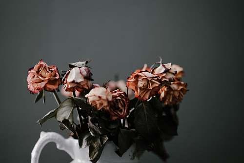 flower orange petaled flower rose