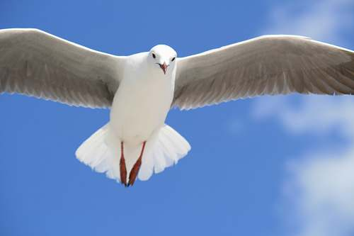 photo bird timelapse photo of white bird flying seagull free for commercial use images