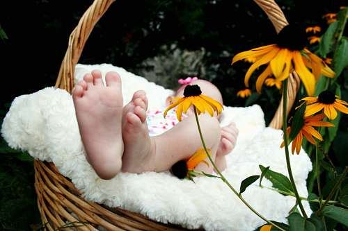 photo flower baby laying on brown wicker basket flora free for commercial use images
