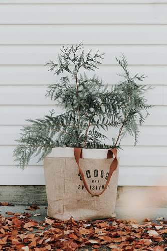 plant green-leafed plant on gift bag tree