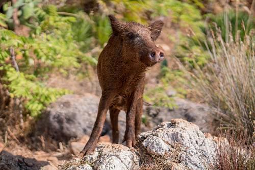 brown 4-legged animal on rock