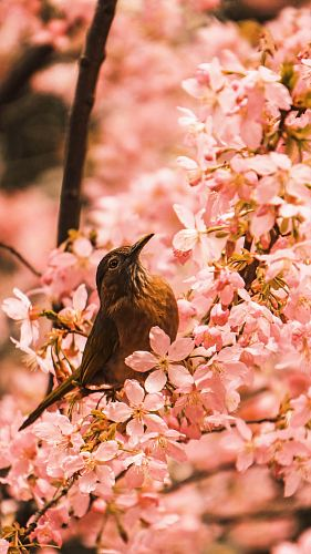 photo brown bird fetched on tree branch free for commercial use images