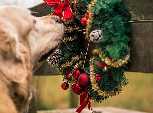 dog dog smelling garland wreath pet