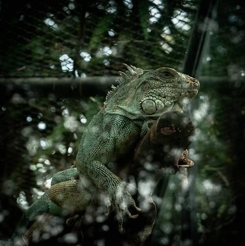 photo chameleon on log free for commercial use images