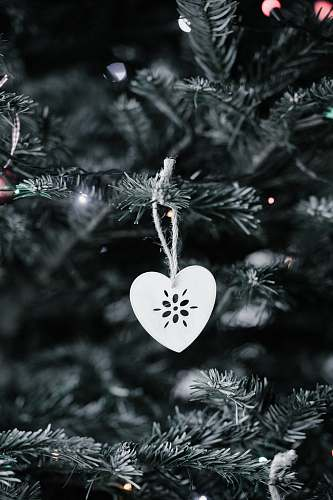 photo tree gray heart Christmas tree ornament conifer free for commercial use images