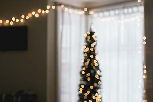 photo christmas wallpapers green Christmas tree with string lights turned on curtain free for commercial use images