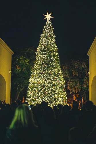 photo horizon christian fellowship people watching lighted green Christmas tree at nighttime rancho santa fe free for commercial use images