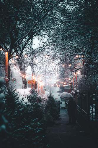 photo winter person holding umbrella near streetlight and trees at daytime snow free for commercial use images