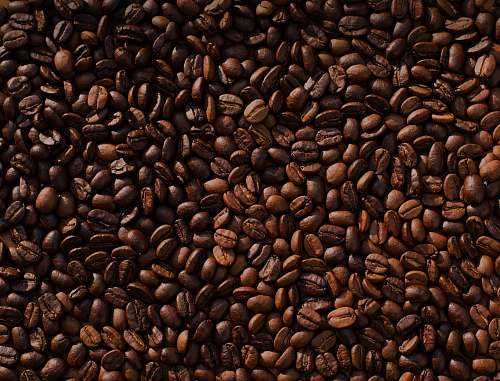 photo bean coffee bean lot food free for commercial use images