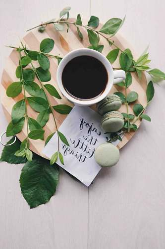 photo quote flat lay photography of leaves with cup of coffee and three macarons on chopping board green free for commercial use images