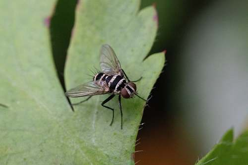 asilidae shallow focus photography of black and gray fly animal