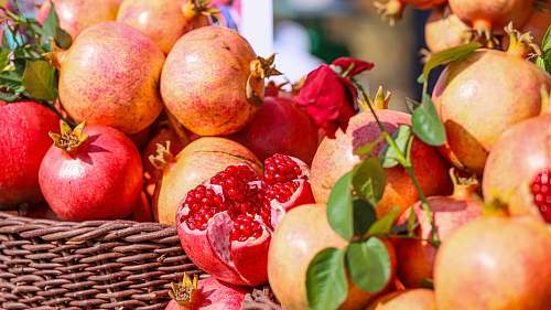 plant baskets of pomegranates produce