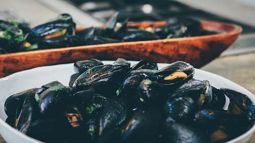 photo bowl cooked mussel. in white bowl mussels free for commercial use images
