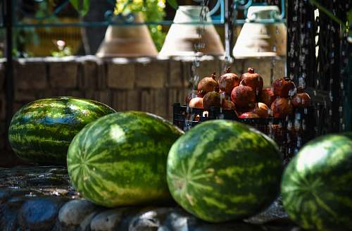 fruit four watermelons plant