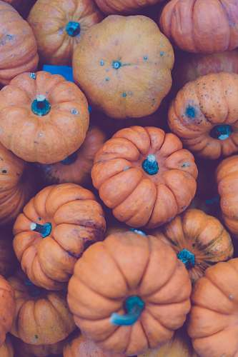 plant orange pumpkin lot pumpkin