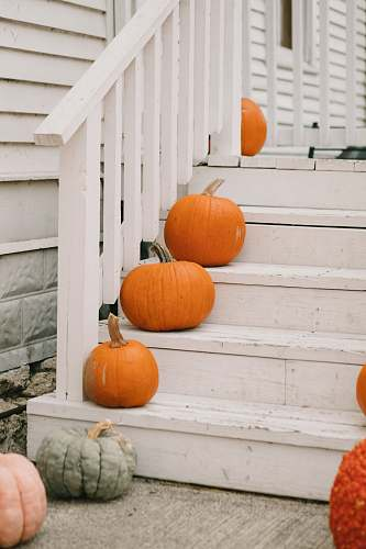 photo plant orange pumpkins on white wooden stairs produce free for commercial use images