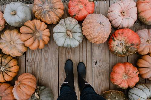 photo plant person standing on brown hardwood floor surrounded by pumpkins pumpkin free for commercial use images