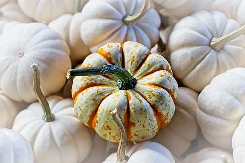 plant pumpkin lot pumpkin