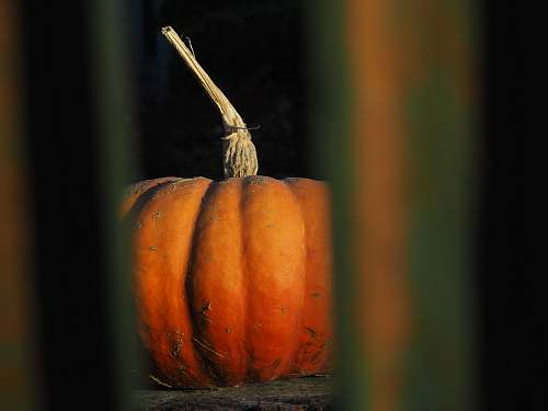 plant selective focus photography of orange pumpkin pumpkin