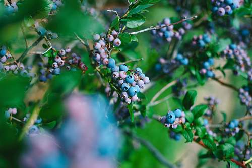 food green plants blueberry