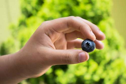 food person holding black fruit blueberry