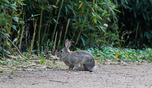 gray rabbit beside plant during daytime