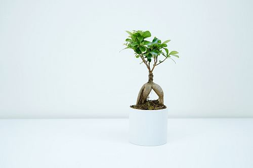 photo green plant in white pot free for commercial use images