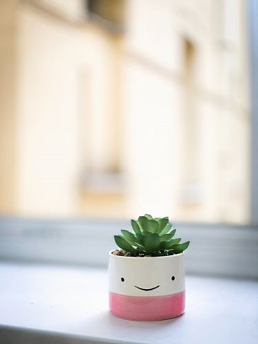 photo green succulent on white and pink pot free for commercial use images