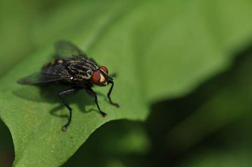 photo fly focus photography of black fly green free for commercial use images