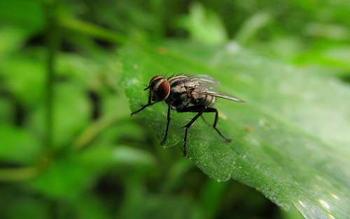 fly selective focus photography of housefly animal