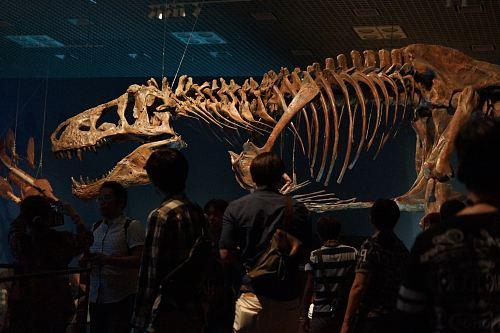 people looking at dinosaur skeleton
